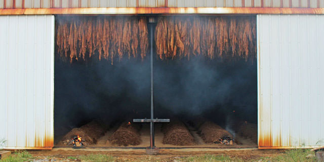 essicazione_tabacco_fire